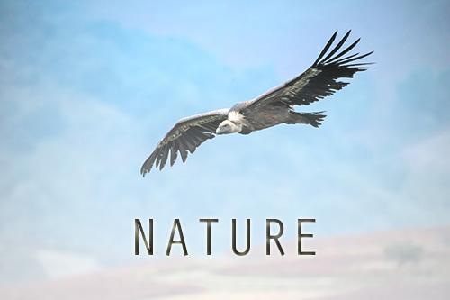 galerie nature